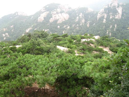 Wulian Mountain: IMG_0940
