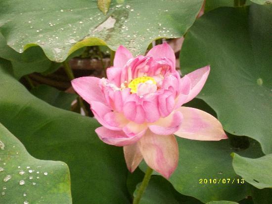 Humble Administrator's Garden: ALIM1256