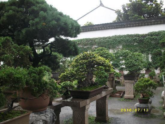 Humble Administrator's Garden: ALIM1276