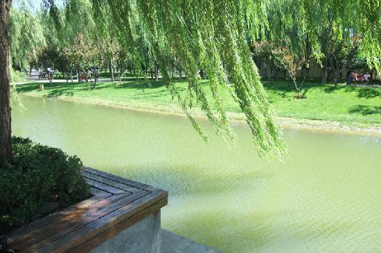Haidian Park: 湖边垂柳