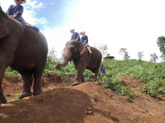 Chiang Mai, Tailandia: 大象训练