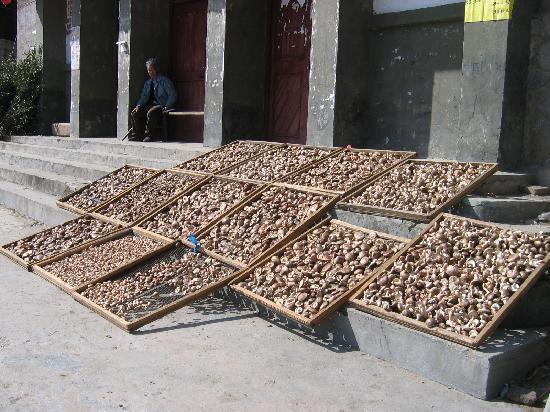 Daji Village: 晒香菇