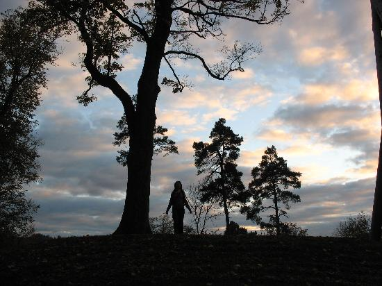 Fryburg Bryzgowijski, Niemcy: 树和人