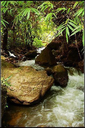 Ruili River-Daying River Scenic Resort : 公园里