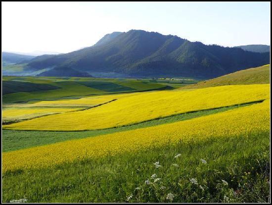 Qinghai, China: p1130318