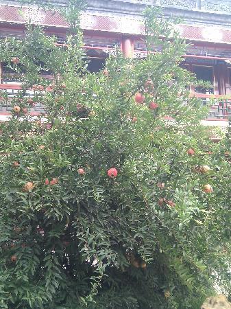Han's Royal Garden Hotel: 庭院内石榴树
