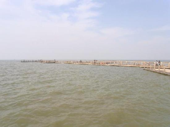 Marsh of Chaohu Area: 巢湖市区湖滨大道景区,修建了一条深入水中的栈道。