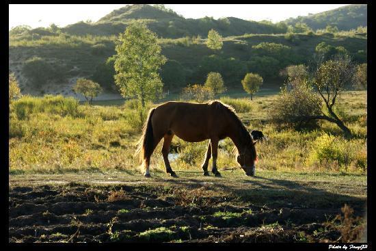 Saihanba National Forest Park: 御道口景区途中散养的马儿