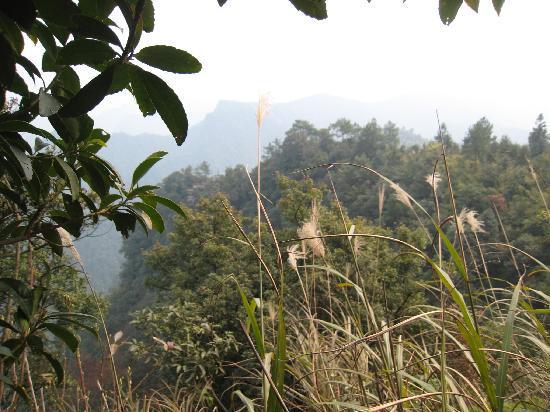 Shanwang Ping Ginkgo Forest: 原始的大山