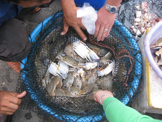 Ciji Palace of Qingjiao: 岸边有最新鲜的海鲜,刚上岸的螃蟹15块一斤哦...