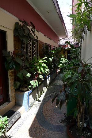 Setia Kawan: 充满绿色植物的走廊