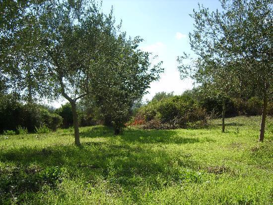 Sassari, Italie : 撒撒里随处可见的绿地