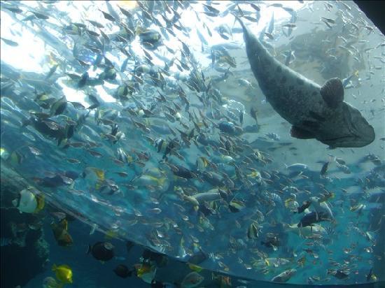 Οκινάβα, Ιαπωνία: 五光十色的鱼群