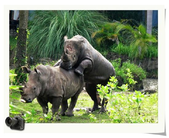 Mara River Safari Lodge: 阳台上拍到的犀牛