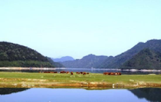 太平湖湿地