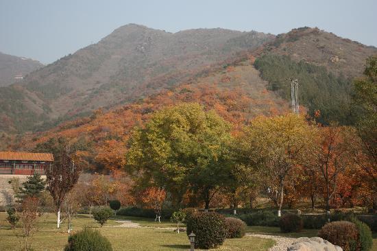 Mangshan Forest Park : 山脚看