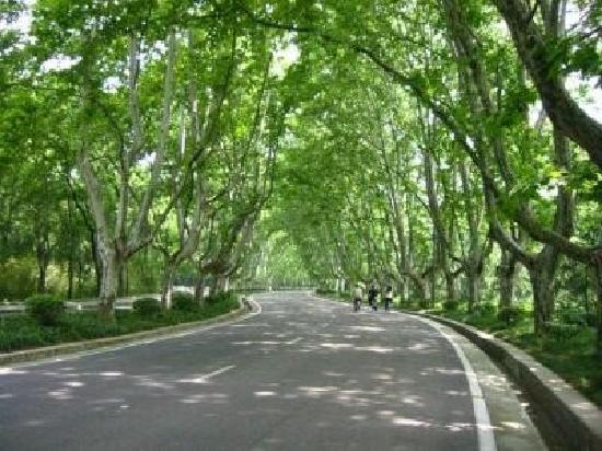 Nanjing, China: 5afb2583a49cb7b6f703a6d6