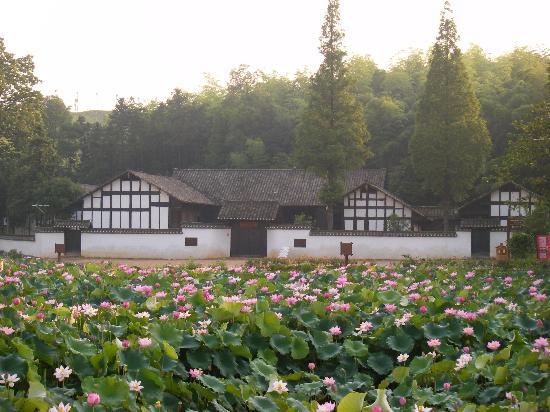 Yiyang, China: 故居前尽情绽放的荷花,其景蔚为壮观