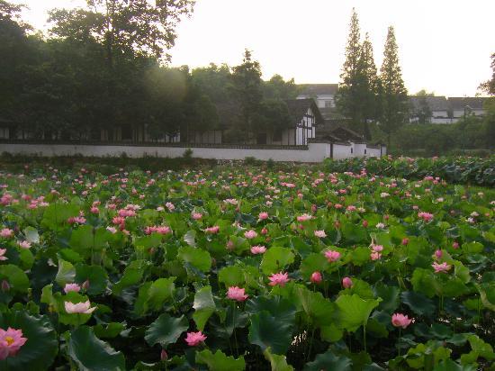 Zhou Libo Former Residence: 故居前的百亩荷塘