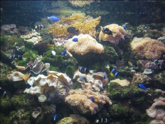 ... Picture of Beijing Underwater World Exhibition, Beijing - TripAdvisor