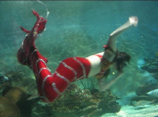 ?? - Foto de Beijing Underwater World Exhibition, Pequim ...