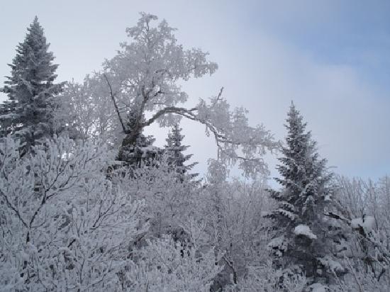 Heilongjiang, Chine : 雪乡穿越的杰作