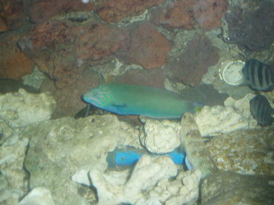 Hainan, Kina: 鱼