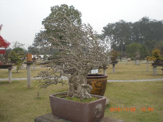 The Baos' Garden