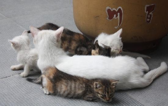 Natian Shougong Theme Inn : 旅馆里的可爱猫猫