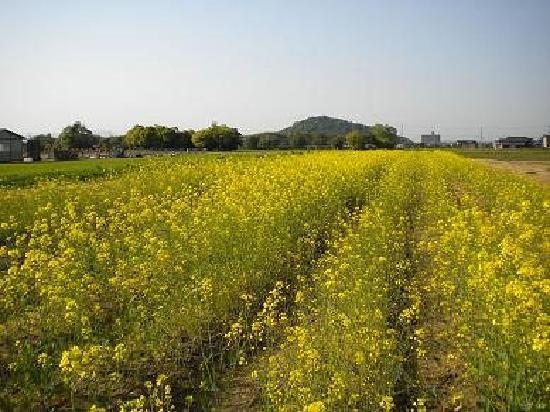 Kashihara, Japón: 耳成山