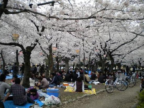 Nagoya, Jepang: 鹤舞公园的赏樱场面代表着日本人对于赏樱的热衷