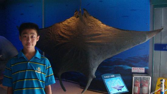 Qingdao, China: 海底世界。生物标本馆2010、8、17