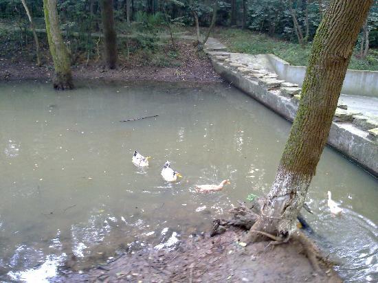 Junqu Dongyuan Hotel : 池塘