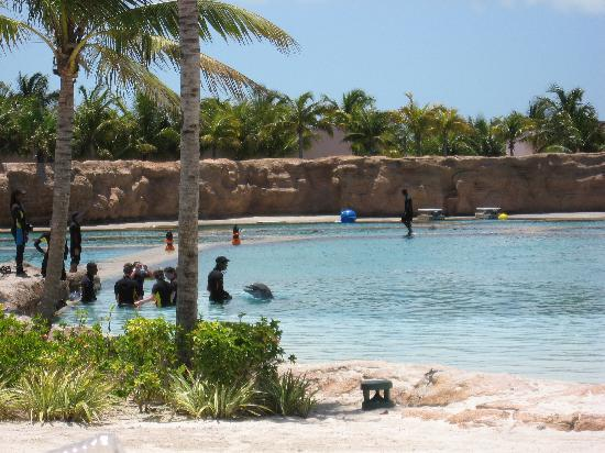 Dolphin Bay: 迪拜-shallow water dolphin experience