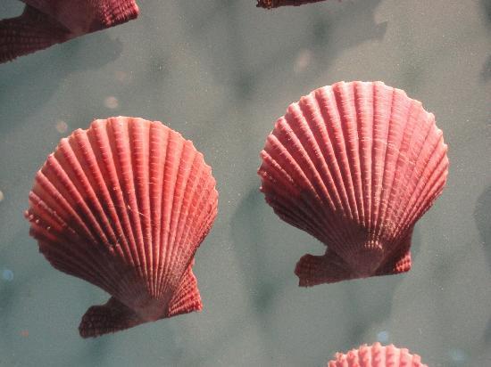 Dalian Shell Museum: IMG_0006