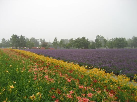 Furano, Japonya: 也是花田