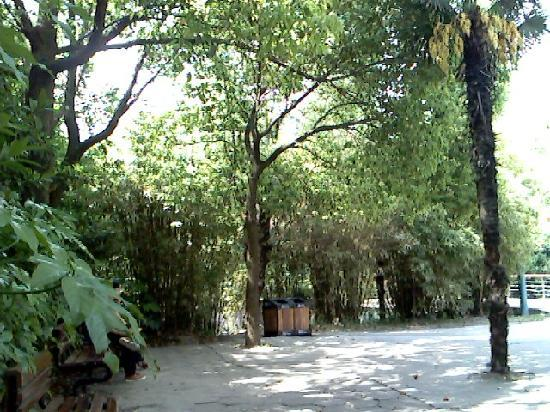 Wenfeng Park: IMG0689A