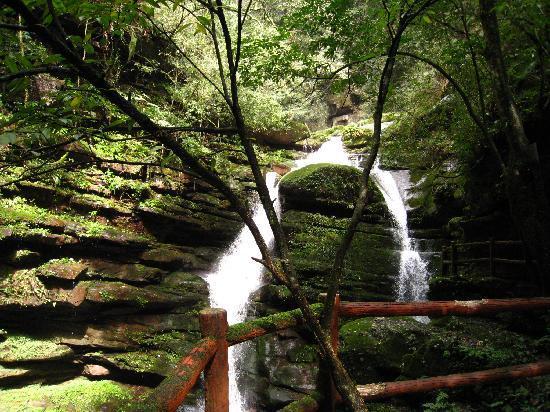 Ya'an Bifeng Canyon: Pic 090