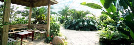 رمادا بلازا سينو باي شنغهاي: 生态植物园