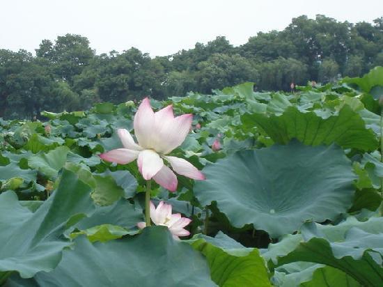 Hangzhou, China: 浙江杭州西湖美景