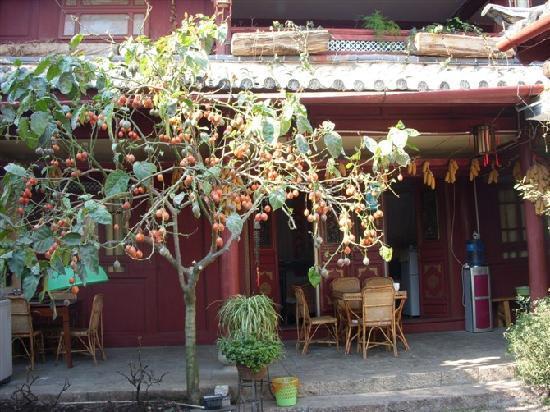 Xia Ke Xing Hotel: 小院里的番石榴