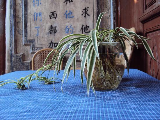 Qingxin Courtyard : 宁静致远