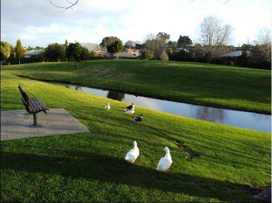 Tauranga, Neuseeland: 野鸭 草地@Bethlehem