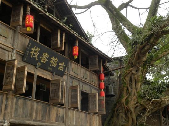 Hongya County, China: 旁边的古树见证着时间的一切