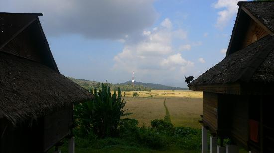 Kampung Tok Senik Resort Langkawi: 窗外是金黄的麦田