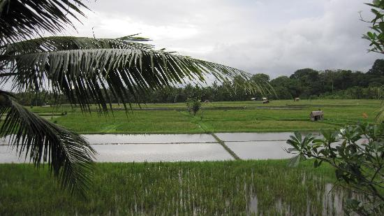 Green Field Hotel & Restaurant: rice field view