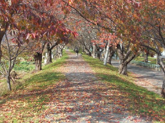 Kesennuma, Ιαπωνία: 气仙沼的秋天PLAZA