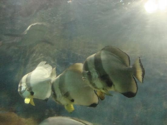 Xiamen Underwater World