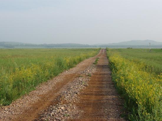 Zhangbei County, China: 一条长满野花的路