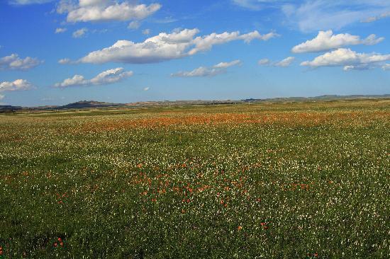Capital Site of Yuan-Dynasty : 金莲川草原,《元上都》就位于她的腹地,一望无际的绿丝毯般的草地,还有那各色各样的花,那简直就是花的海洋……